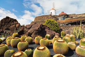 Explore The Cactus Garden Lanzarote - Best Excursions to The Cactus Garden - Best Tours To The Cactus Garden - Volcanic Landscape with Geysery & Eatery